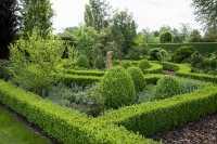 Buchsbaum • Buxus sempervirens Arborescens