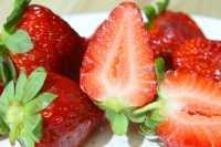 Erdbeere Korona • Fragaria vesca Korona