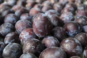 Pflaume Hauszwetsche • Prunus domestica Hauszwetsche