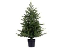 Weihnachten Kae Grandis Mini Topfbaum, 60cm grün