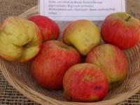 Apfel Wohlschmecker aus Vierlanden • Malus Wohlschmecker aus Vierlanden