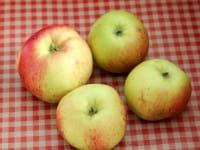 Apfel Roter Gravensteiner • Malus Roter Gravensteiner