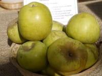Apfel Gelber Richard • Malus Gelber Richard