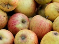 Apfelbaum Goldparmäne • Malus Goldparmäne