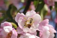Blütenbestäubung - Koevolution