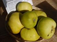 Apfel Riesenbioken • Malus Riesenboiken