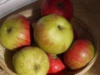Apfel Gewürzluiken • Malus Gewürzluikenapfel