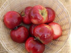 Apfel Roter Herbstkalvill • Malus Roter Herbstkalvill