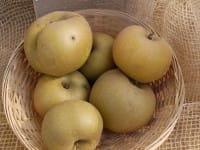 Apfel Zabergäu Renette • Malus Zabergäu Renette