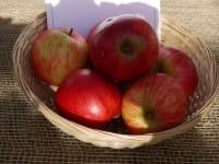 Apfelbaum Pommerscher Krummstiel • Malus Pommerscher Krummstiel