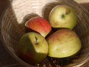 Apfel Prinzenapfel • Malus Prinzenapfel