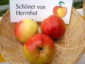 Weltalf at the German language Wikipedia [CC BY-SA (https://creativecommons.org/licenses/by-sa/3.0)]