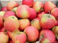 Apfelbaum Pinova • Malus Pinova