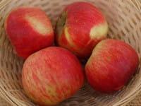 Apfel Kardinal Bea • Malus Kardinal Bea