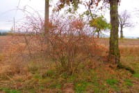 Pflanzenerkennung Baum oder Strauch