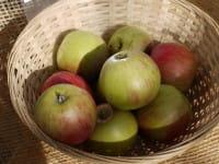 Apfel Rheinischer Bohnapfel • Malus Rheinischer Bohnapfel